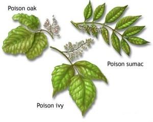 Poison-Ivy-poison-oak-poison-sumac